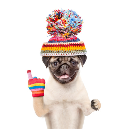 forefinger: Dog in warm hat points up. isolated on white background.