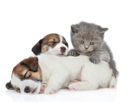 Kitten and sleeping puppies Jack Russell. isolated on white background.
