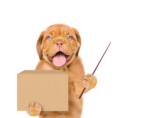 Dog holding a pointing stick and big package. isolated on white background.