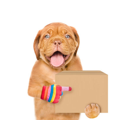 Funny dog delivering a big package and points index finger. isolated on white background.