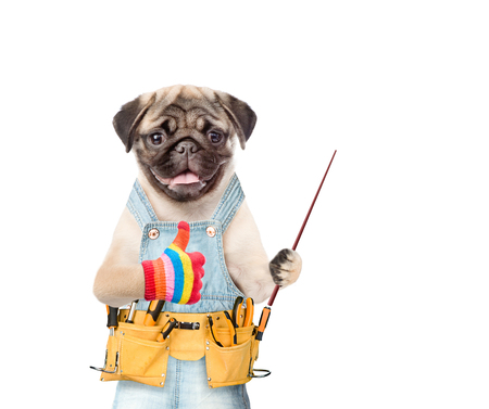 Funny dog worker with tool belt and pointing stick. Isolated on white background