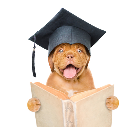 Graduated dog with open book. isolated on white background.