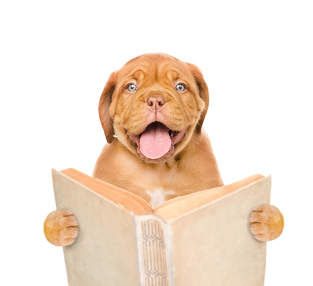 paw smart: Happy puppy with open book. isolated on white background.
