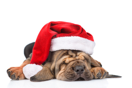 Sleeping bloodhound puppy in red christmas hat. isolated on white background. Stock Photo