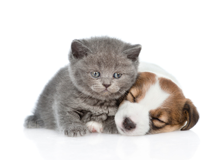 Cute kitten near sleeping puppy Jack Russell. isolated on white background. Stock Photo