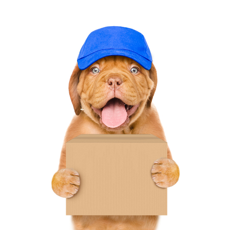 Funny dog in cap delivering a big package. isolated on white background.