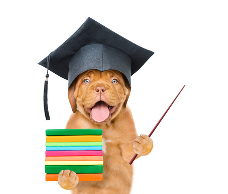 Graduated dog holding books and pointing stick. isolated on white background.