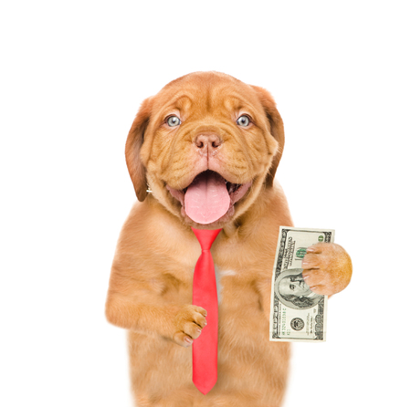 Puppy with dollar in paws. isolated on white background.