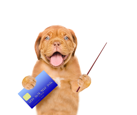 paying: Funny puppy hold credit card and pointing stick. isolated on white background.