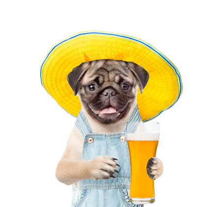 Funny puppy in summer hat with beer. Isolated on white background.