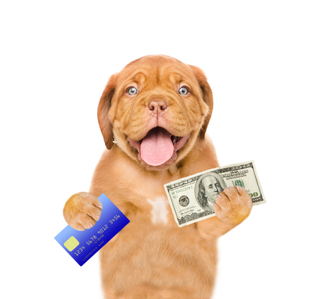 Funny puppy hold credit card and dollars USA. isolated on white background.