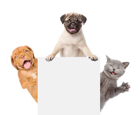 猫と犬の白いバナーの上のピークします。白い背景上に分離。 写真素材 - 78962001
