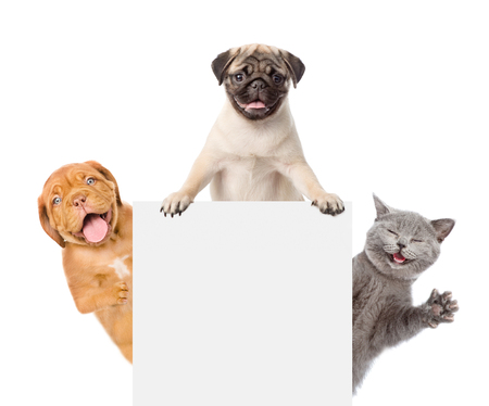 Cat and Dogs peeking above white banner. isolated on white background.