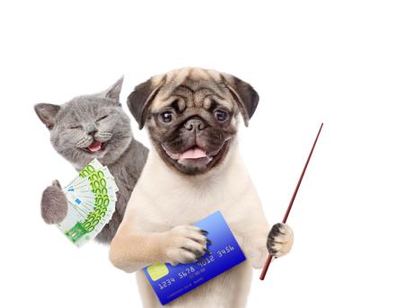 plastico pet: El gato feliz con el euro y el perrito divertido sostienen la tarjeta de crédito y el señalar el palillo. aislado en fondo blanco.
