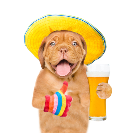 Funny puppy in summer hat with a glass of beer showing thumbs up. isolated on white background.