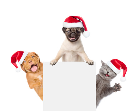 Cat and Dogs in red santa hats  peeking above white banner. isolated on white background