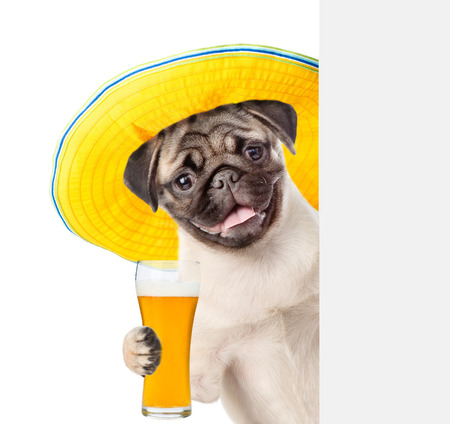 Dog in summer hat with light beer peeking above white banner. isolated on white background.