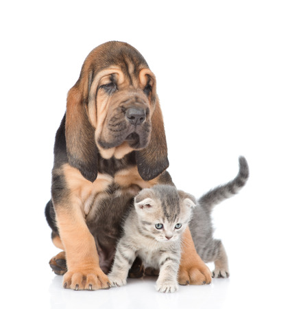 Cute puppy embracing kitten. isolated on white background.