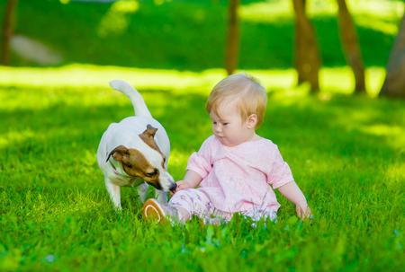 草の上に座っている女の赤ちゃんはジャック ラッセル テリア子犬夏の公園で。 写真素材