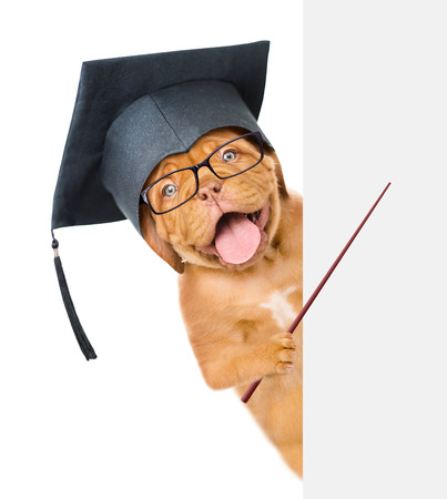Graduated dog holding a pointing stick and points on empty banner. isolated on white background.