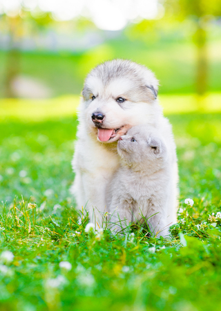 Kitten kissing puppy on green grass.