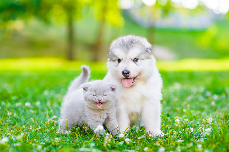 Mewing kitten and a puppy on green grass. Imagens