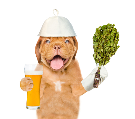 Dog in the hat for a bath holding a beer and birch broom. isolated on white background.