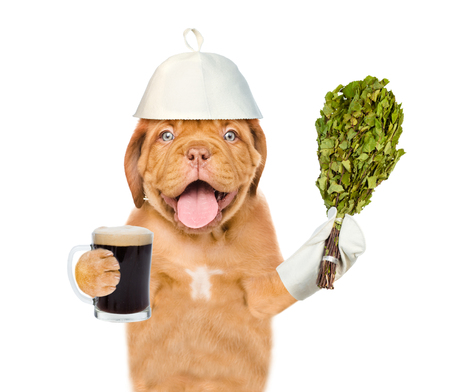 finnish bath: Happy puppy in the hat for a bath holding a beer and birch broom. isolated on white background.