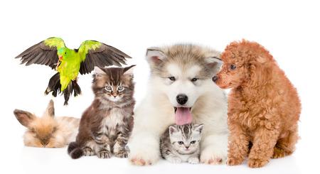 Grupo de mascotas juntas en la vista frontal. Aislado en el fondo blanco.