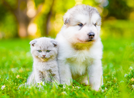 Puppy and kitten sitting together on green grass in front view. Stock Photo