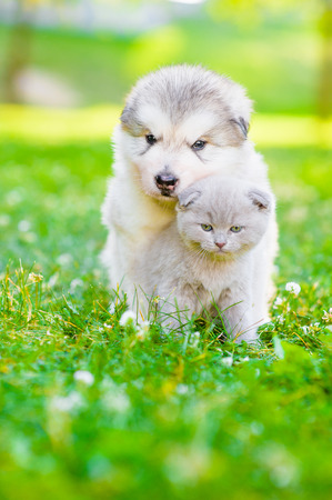Puppy hugging a kitten on summer green grass. Space for text. Stock Photo