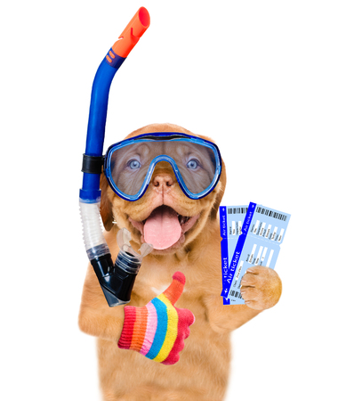 scuba goggles: Funny dog in snorkeling mask holding air ticket and showing thumbs up. Isolated on white background. Stock Photo