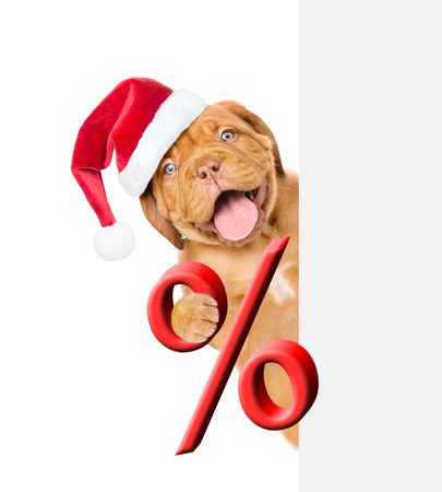 Funny puppy in red christmas hat holds a percent sign above white banner. isolated on white background. Stock Photo