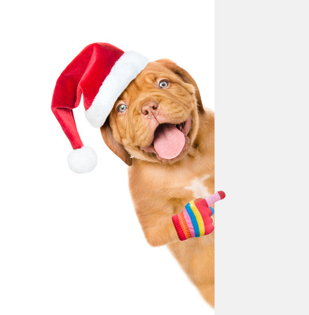 Happy puppy in red christmas hat pointing at blank placard. isolated on white background.