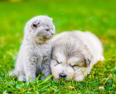 Cute kitten sitting with sleeping puppy on summer green grass.