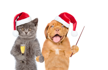 Kitten in red santa hat with a glass of champagne and puppy with pointing stick. isolated on white background.