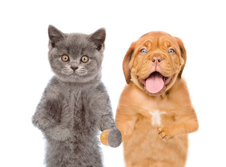 Dog and cat holding hands. isolated on white background.