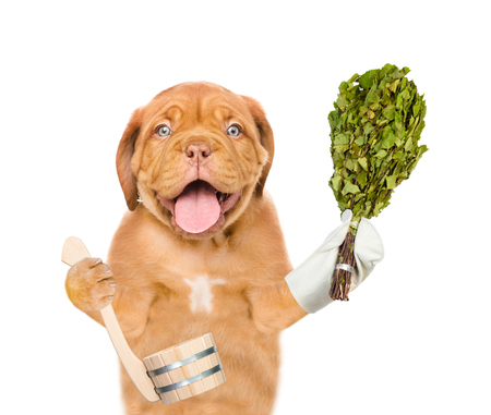 Funny puppy holding birch broom and ladle. isolated on white background. Stock Photo