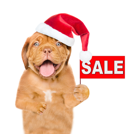 Funny puppy in red christmas hat with sales symbol. isolated on white background. Stock Photo