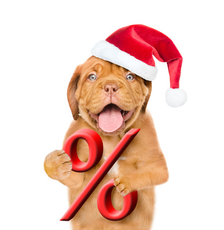 Funny puppy in red christmas hat holds a percent sign. isolated on white background.