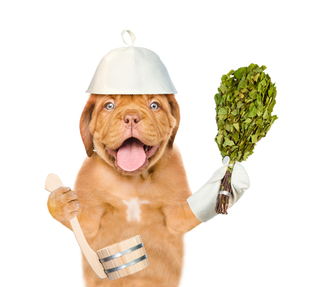 Dog in a hat for a sauna holding birch broom and ladle. isolated on white background.