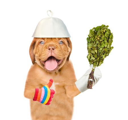 Dog in a hat for a sauna holds birch broom and showing thumbs up. isolated on white background.