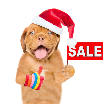 Funny puppy in red christmas hat with sales symbol showing thumbs up. isolated on white background.