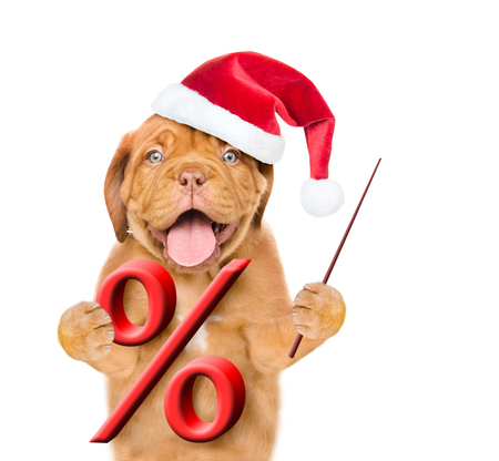 Funny puppy in red christmas hat holds a percent sign and pointing stick. isolated on white background. Stock Photo