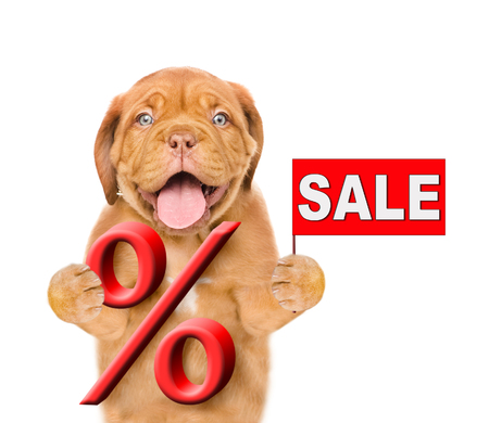 Funny puppy holds a percent sign and sales symbol. isolated on white background. Stock Photo