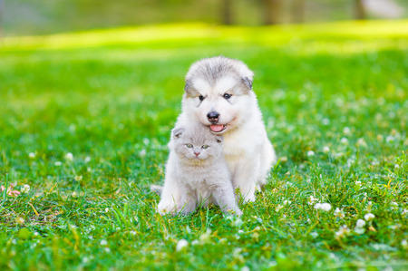 Cute puppy embracing kitten on summer green grass. Space for text.