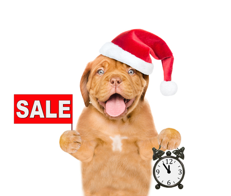 Funny puppy in red christmas hat with sales symbol showing alarm clock. isolated on white background. Stock Photo