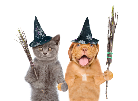 Funny cat and dog in hats for halloween with witches broomsticks . isolated on white background. Stock Photo
