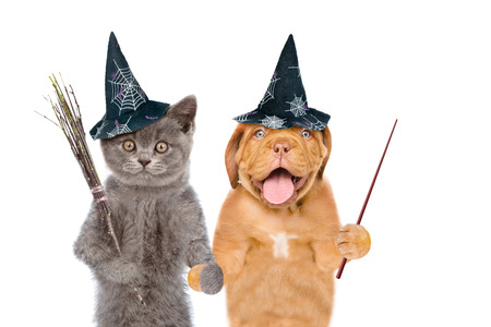 Cat and dog in hats for halloween with witches broomstick and pointing stick. isolated on white background. Stock Photo
