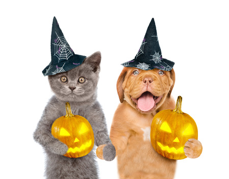 Funny cat and dog in hats for halloween with pumpkins. isolated on white background.